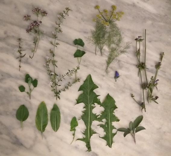 Il nostro raccolto di fiori e piante spontanee di fine agosto