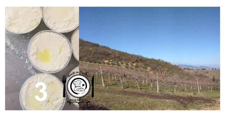 Serrapetrona: i formaggi dei Fratelli Angeli in vigna Colleluce